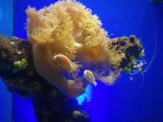 Ozeanographisches Museum Monaco Anemone