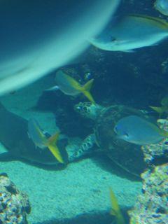 Ozeanographisches Museum Monaco Schildkroete